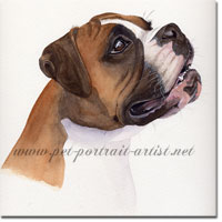 Portrait of a Boxer Dog