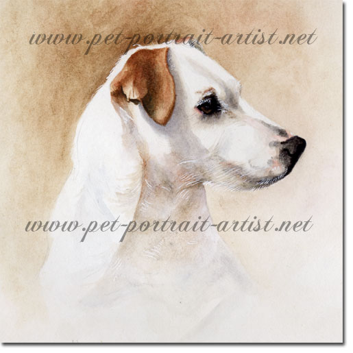 Portrait of a pet Jack Russell Terrier by Joanna Culley
