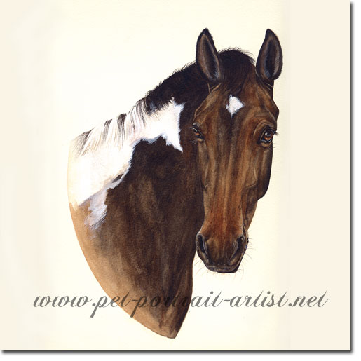 Horse Portrait of Pinto, by Joanna Culley