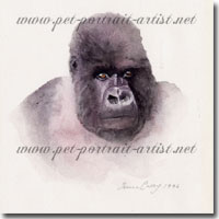 Watercolour painting of a gorilla by Joanna Culley