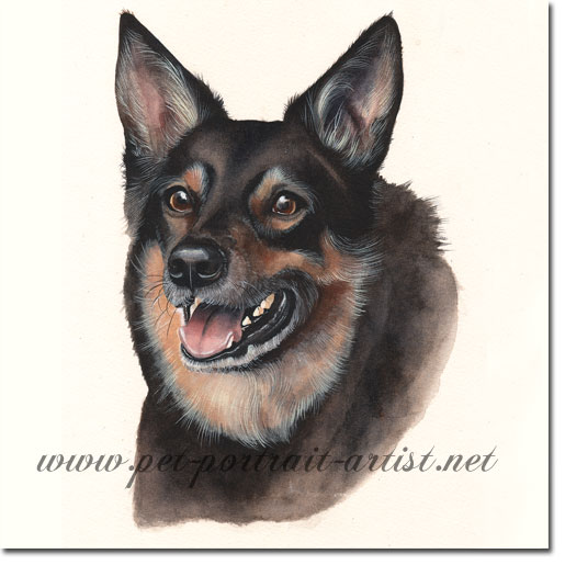 Dog Portrait of Rufus, by Joanna Culley acclaimed animal artist