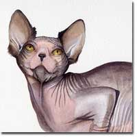 Watercolour Cat Portrait, of a Sphynx cat,  by Joanna Culley