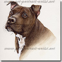 Dog Portrait of a Staffordshire Bull Terrier by Joanna Culley