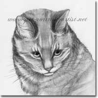 Pencil Cat Portrait, by Joanna Culley, Pet Portrait Artist