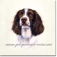 Dog Portrait of a Springer Spaniel .