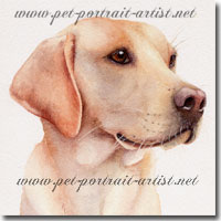 Portrait of Tom, Labrador by Joanna Culley. Click on image to see enlarged version.