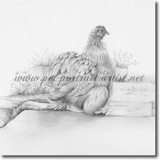 Pencil Drawing of a Chicken'